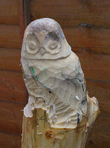wyke-owl-006